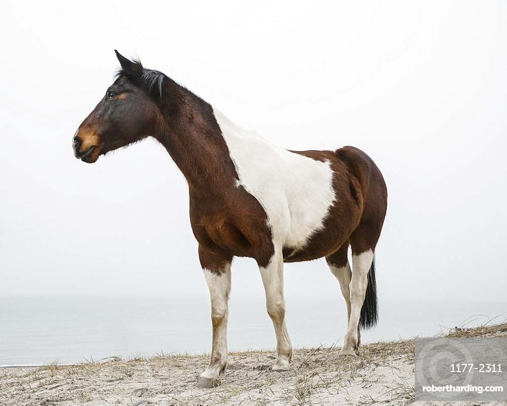 Brown and white horse on beach