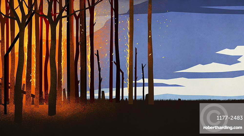 Forest fire burning trees at night