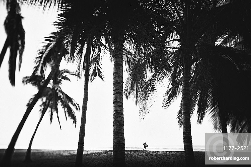 Surfer with surfboard under tall palm trees on tropical ocean beach, San Pancho, Nayarit, Mexico