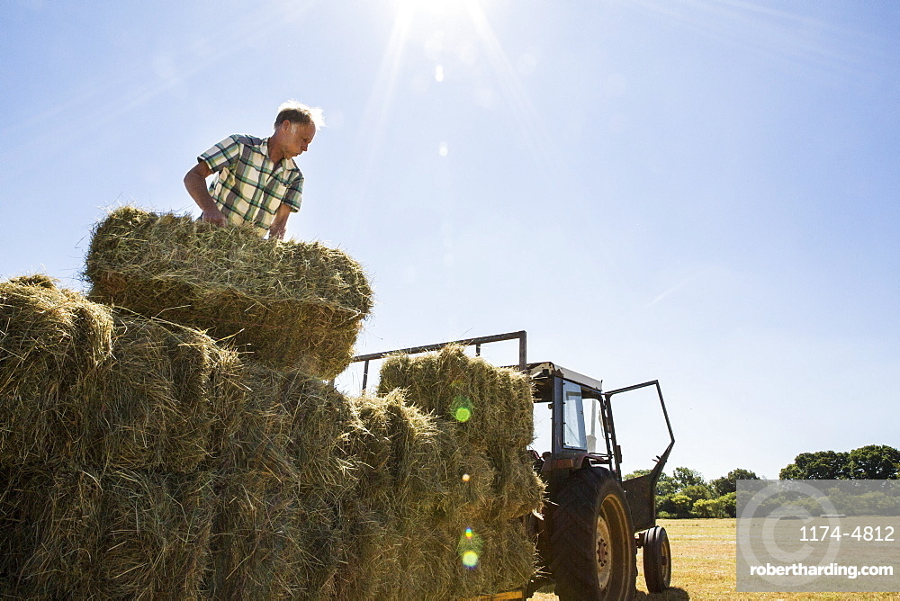 Farmer stacking hay bales on a trailer, Oxfordshire, England