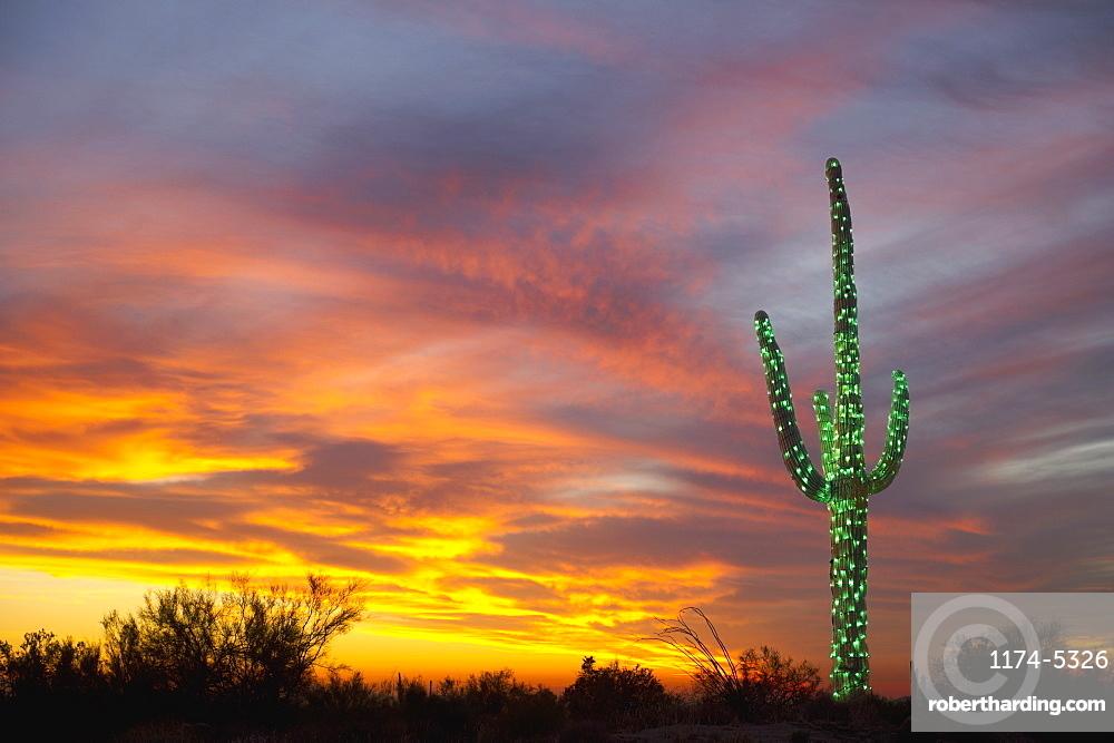 Christmas Suguaro in the Desert, Phoenix, Arizona, United States of America