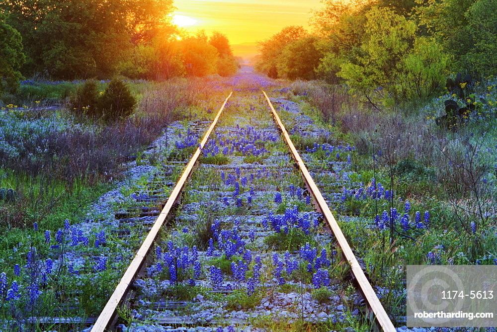Blue Bonnets on Railroad Tracks, Texas, United States of America