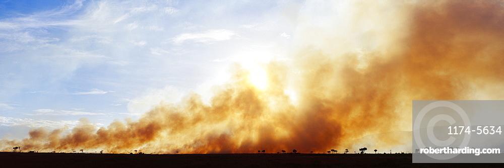 Controlled Burn Masai Mara Game Reserve, Masai Mara, Kenya, Africa