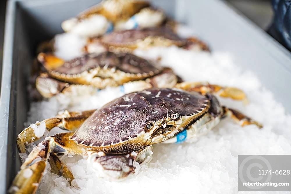 Group of fresh caught crab shellfish on ice at a fish market
