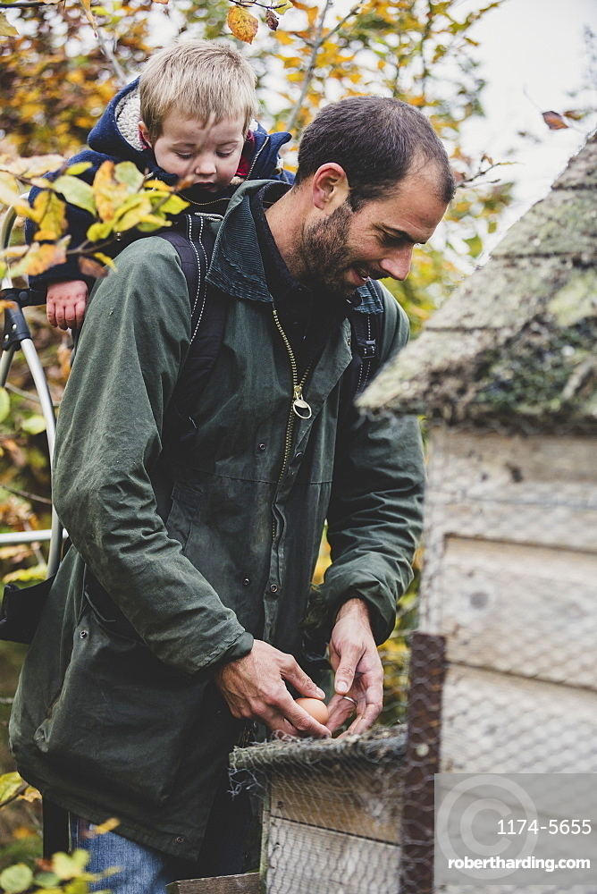 Bearded man carrying young boy on his back picking fresh eggs from chicken coop on a farm, Oxfordshire, England