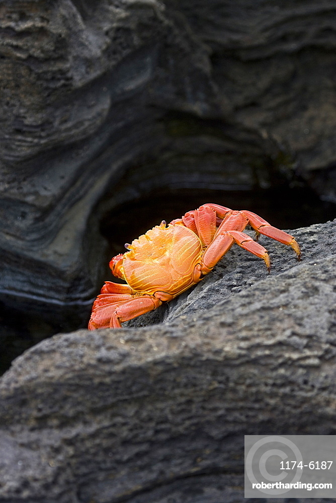 Close up of crab on rock formation