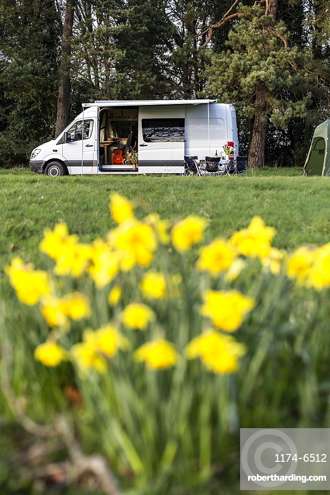 Close up of yellow daffodils in spring, camper van parked in the distance, Oxfordshire, England
