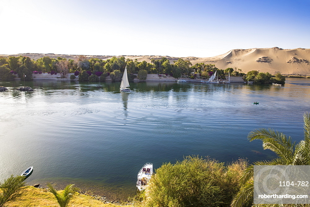 View of River Nile and the Botanical Gardens on Kitchener Island, Aswan, Upper Egypt, Egypt, North Africa, Africa