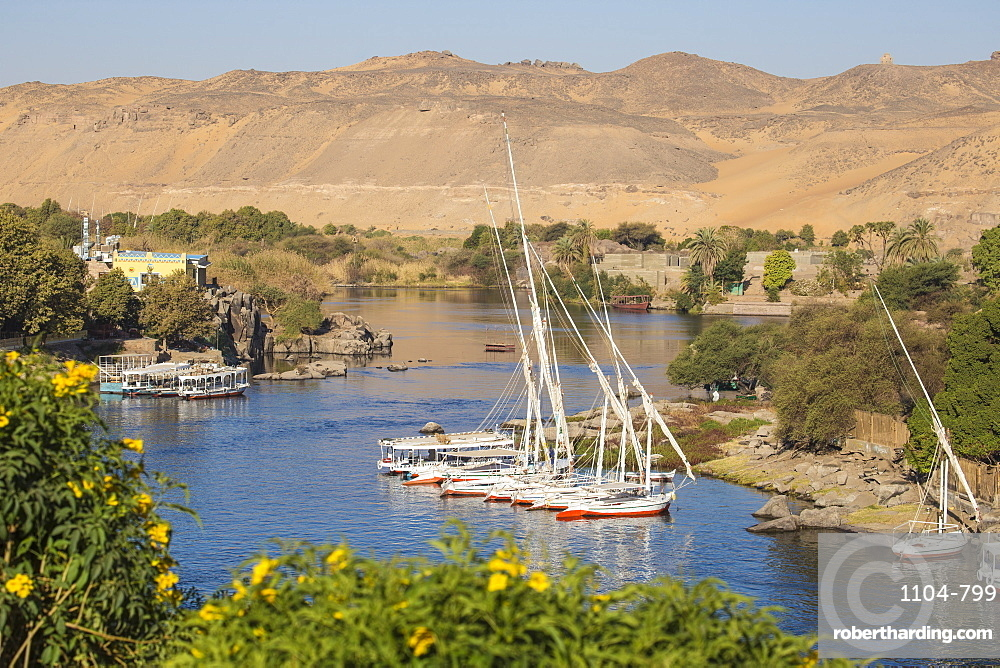 Feluccas on River Nile and Aswan, Upper Egypt, Egypt, North Africa, Africa