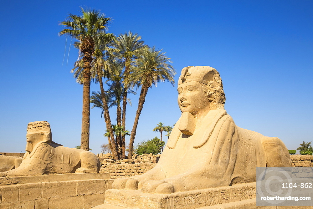 Egypt, Luxor, Luxor Temple, Avenue of Spinxes