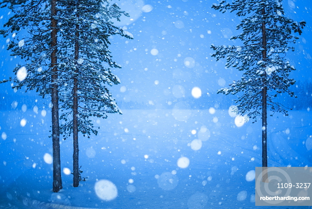 Heavy snow in Lapland, Pallas-Yllastunturi National Park, Lapland, Finland, Europe