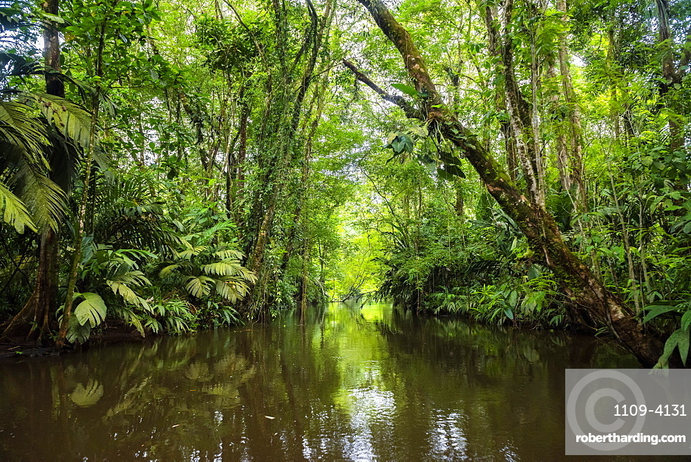 Tortuguero National Park, Limon Province, Costa Rica