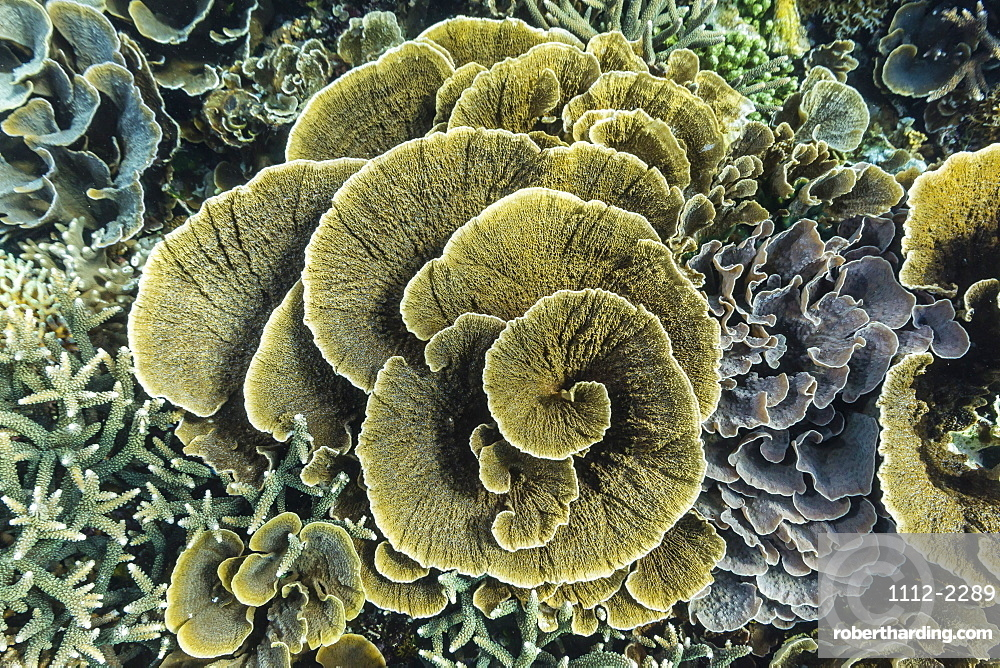 A profusion of hard and soft coral underwater on Siaba Kecil, Komodo Island National Park, Indonesia, Southeast Asia, Asia