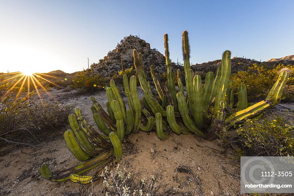 Open Sonoran desert at sunset near Mision de San Francisco de Borja, Baja California, Mexico, North America