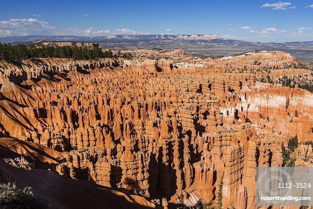 View of The Amphitheater from the Navajo Loop Trail in Bryce Canyon National Park, Utah, United States of America, North America