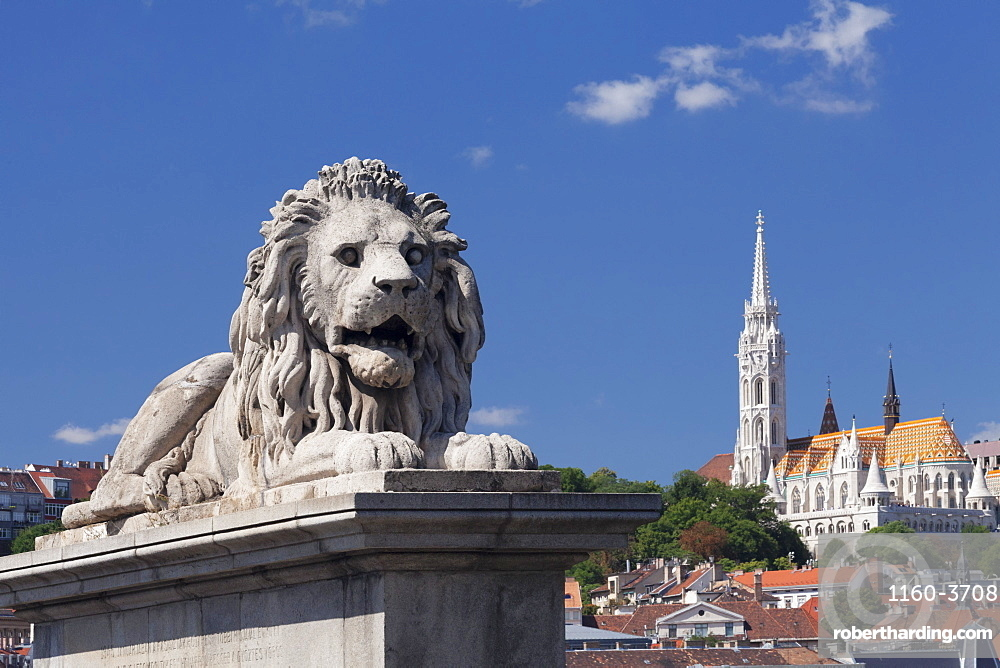 Lion statue on Chain Bridge, Matthias church on castle hill, Budapest, Hungary