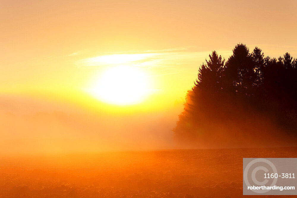 Landscape with early morning fog at sunrise in autumn, Hunsruck, Rhineland-Palatinate, Germany, Europe