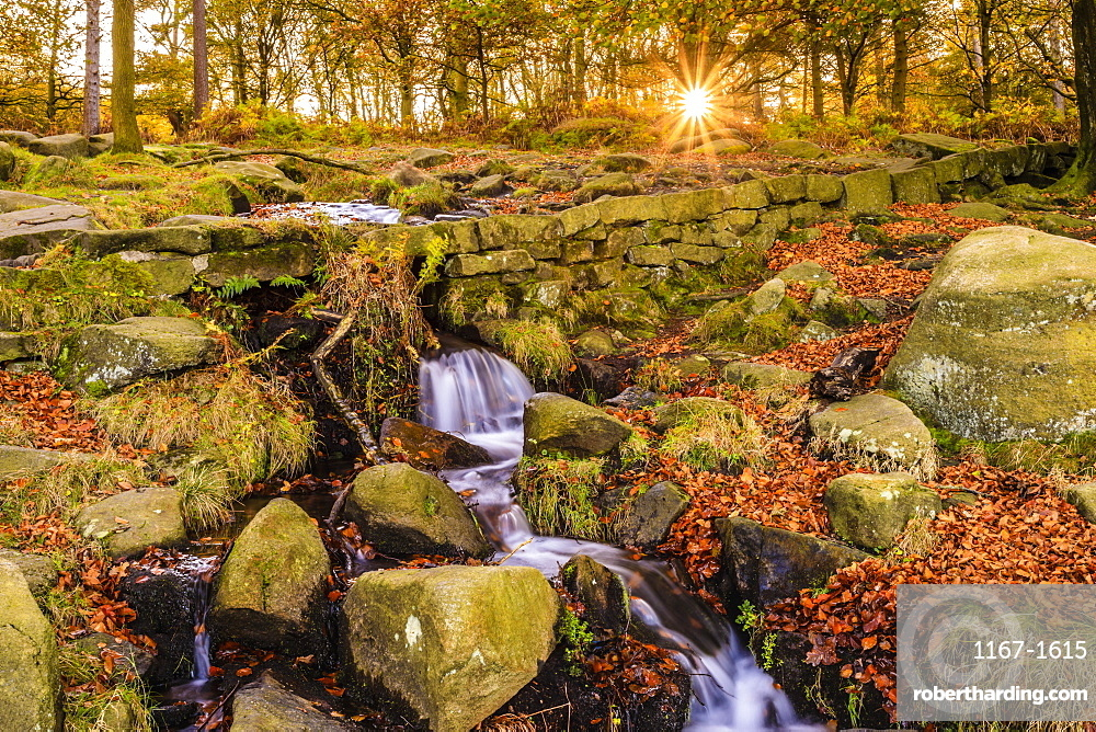Burbage Brook, Autumn sunrise, golden leaves and waterfall, Padley Gorge, Peak District National Park, Derbyshire, England