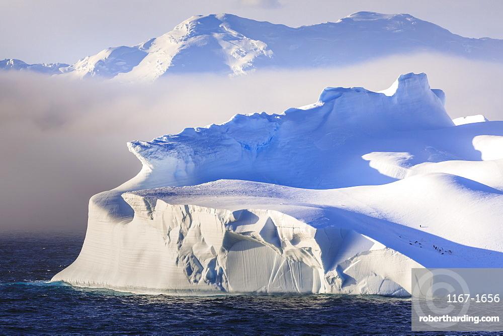 Penguins on a huge non-tabular iceberg, mountains, evening light and mist, Bransfield Strait, South Shetland Islands, Antarctica, Polar Regions