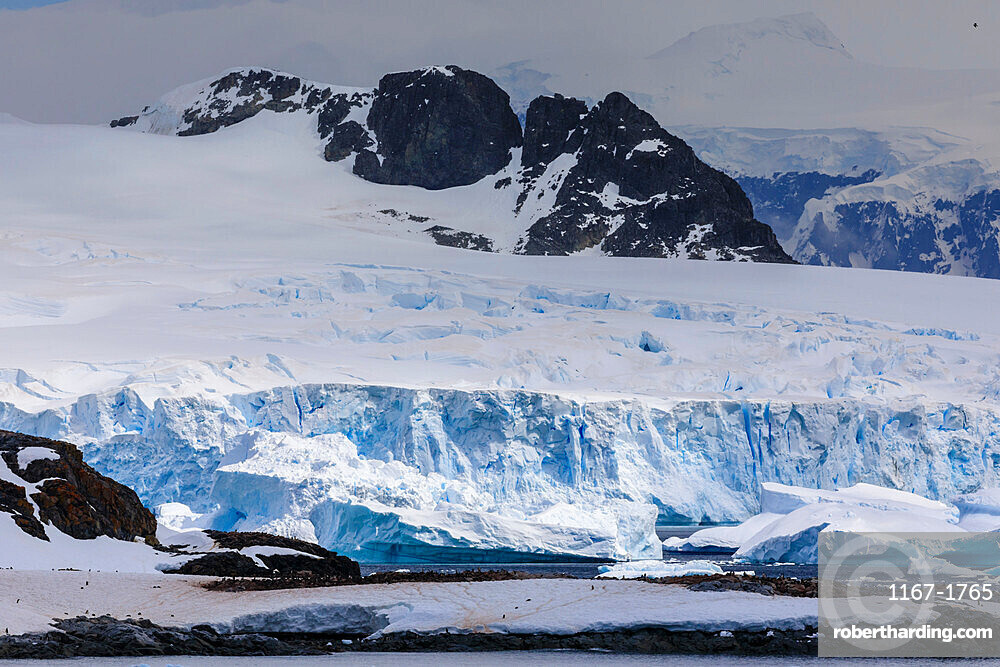 Penguin colonies, icebergs and glaciers, Cuverville Island, Errera Channel, Danco Coast, Antarctic Peninsula, Antarctica, Polar Regions