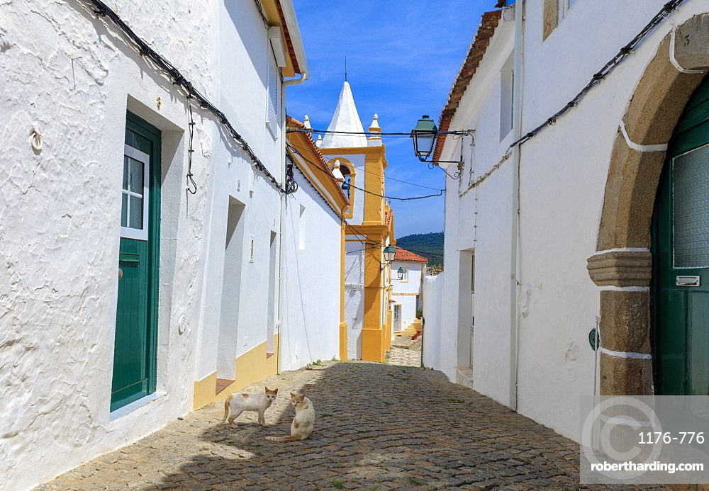Two cats in a back street in Alegrete, a medieval walled village bordering Spain in the high Alentejo, Portugal, Europe