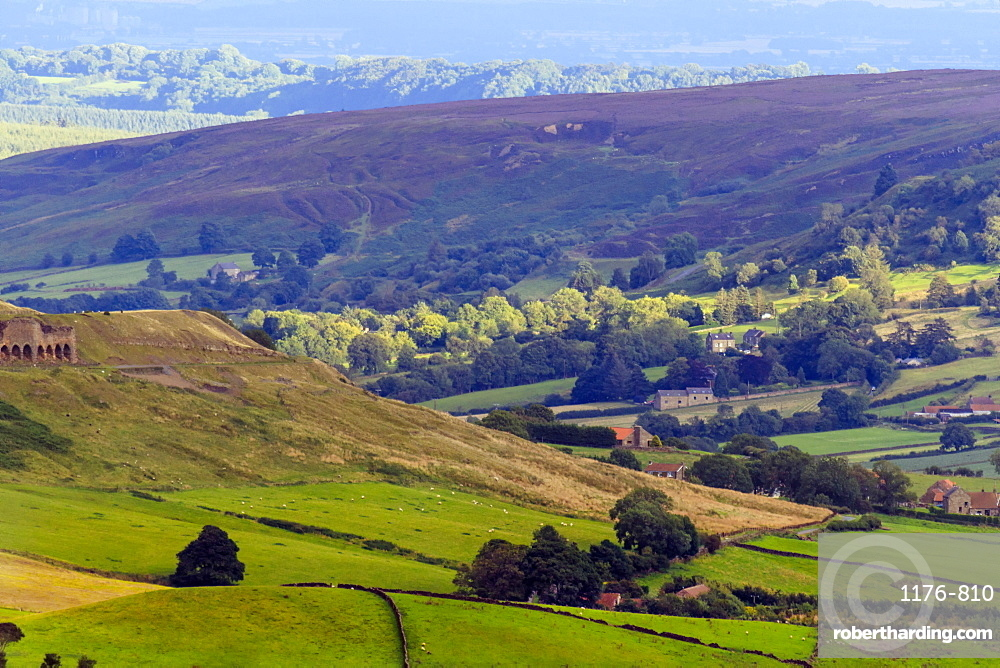 Heathland in bloom, and rolling hills, Yorkshire Moors National Park, Yorkshire, England, United Kingdom, Europe