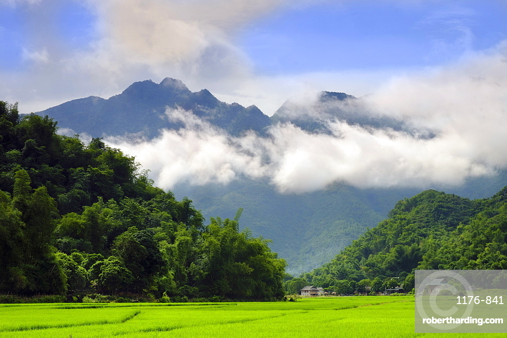 Thatched cottages and rice paddy fields with misty mountains behind, Mai Chau, Vietnam, Indochina, Southeast Asia, Asia