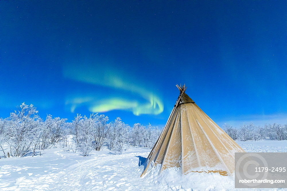Isolated Sami tent in the snow under Northern Lights (Aurora Borealis), Abisko, Kiruna Municipality, Norrbotten County, Lapland, Sweden, Scandinavia, Europe