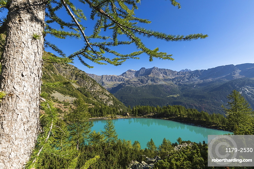 Lago Lagazzuolo surrounded by woods, Chiesa In Valmalenco, Province of Sondrio, Valtellina, Lombardy, Italy, Europe