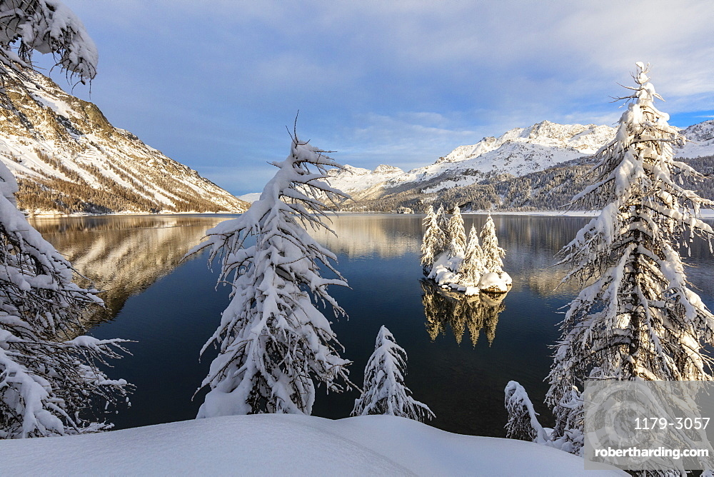 Snow covered trees on the shore of frozen Lake Sils, Plaun da Lej, Maloja Region, Canton of Graubunden, Engadine, Switzerland, Europe