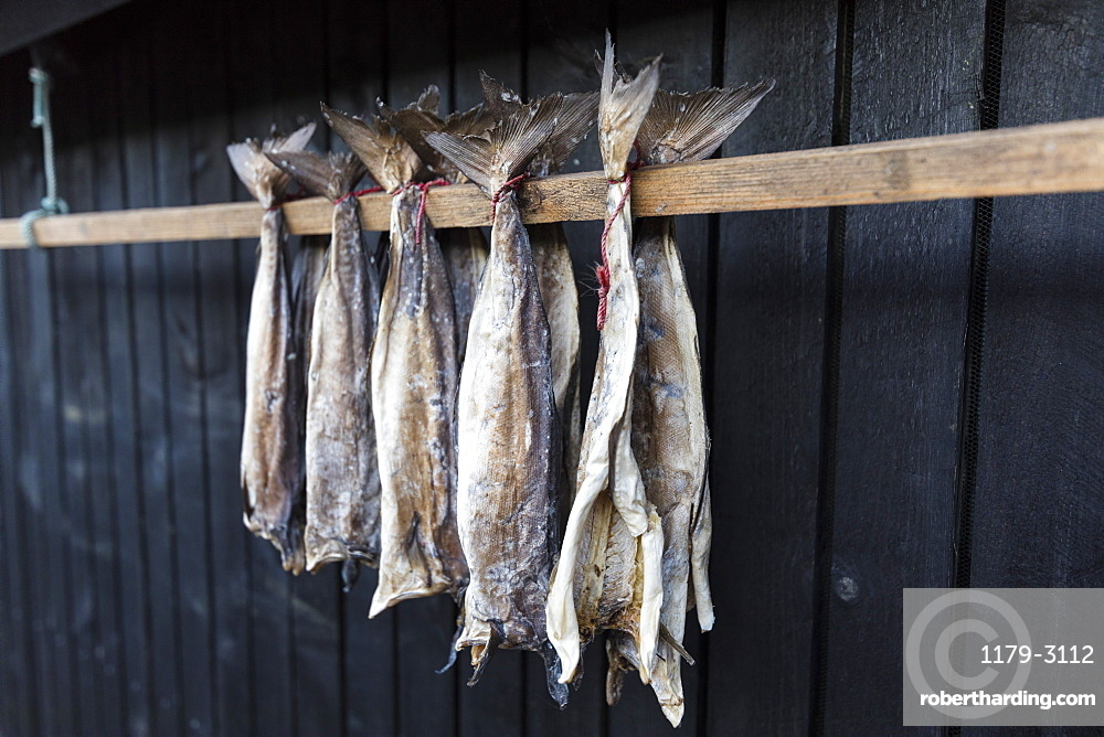 Dried stockfish, Giogv, Eysturoy Island, Faroe Islands, Denmark, Europe