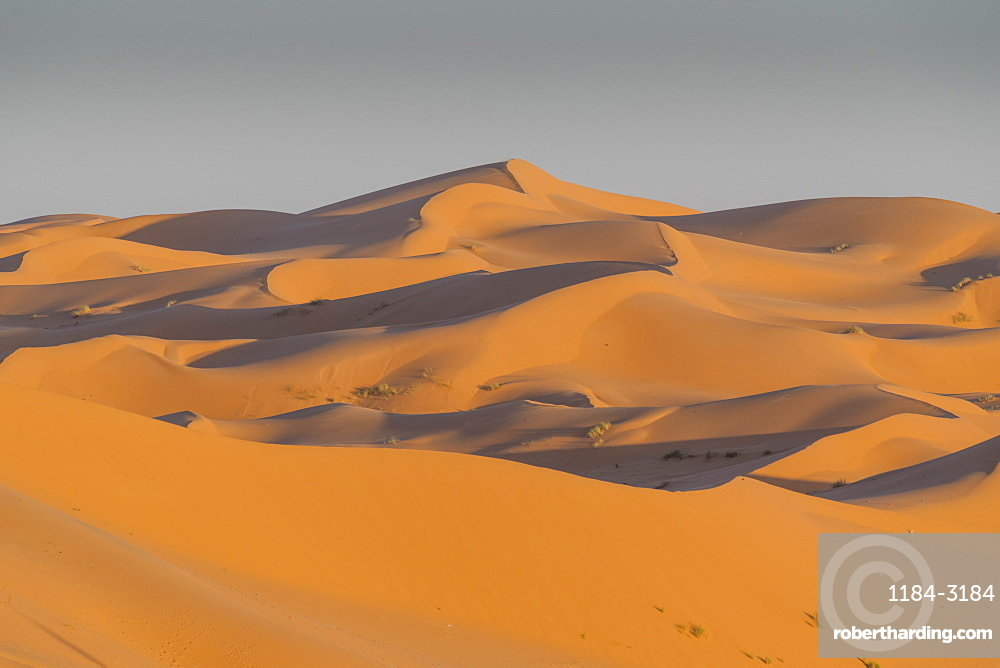 Massive sand dunes behind the Oasis of Taghit, western Algeria, North Africa, Africa