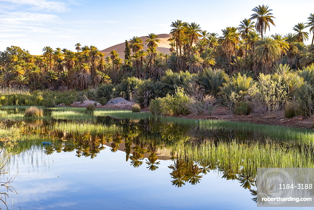 River running through the oasis of Taghit, western Algeria, North Africa, Africa