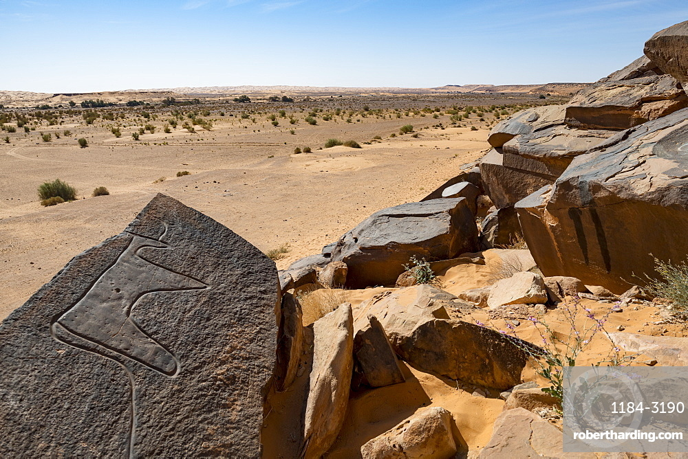 Prehistoric rock carvings near the Oasis of Taghit, western Algeria, North Africa, Africa