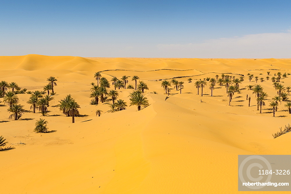 Palm grove in the sanddunes, near Timimoun, western Algeria, North Africa, Africa