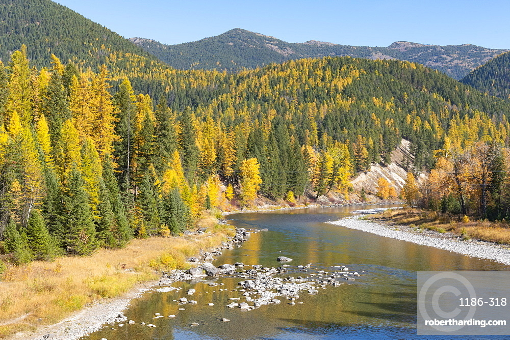 Fall colors along McDonald Creek , Glacier National Park, Montana, USA