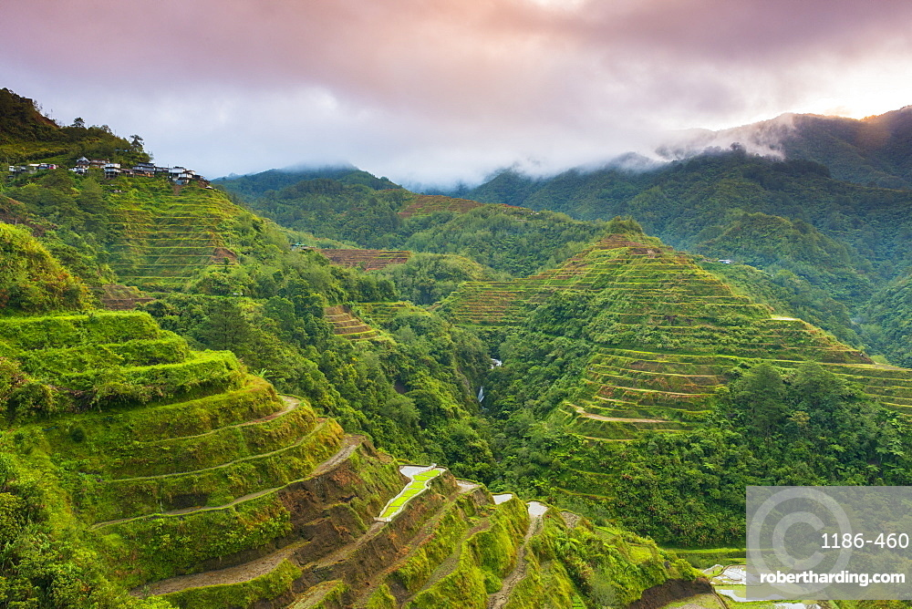 Asia, South East Asia, Philippines, Luzon, Banaue, Rice Terrace