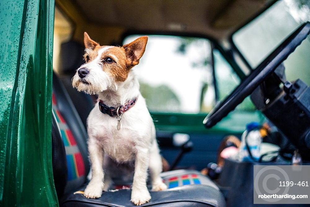 Dog in car, game-shooting, Norfolk, England, United Kingdom, Europe