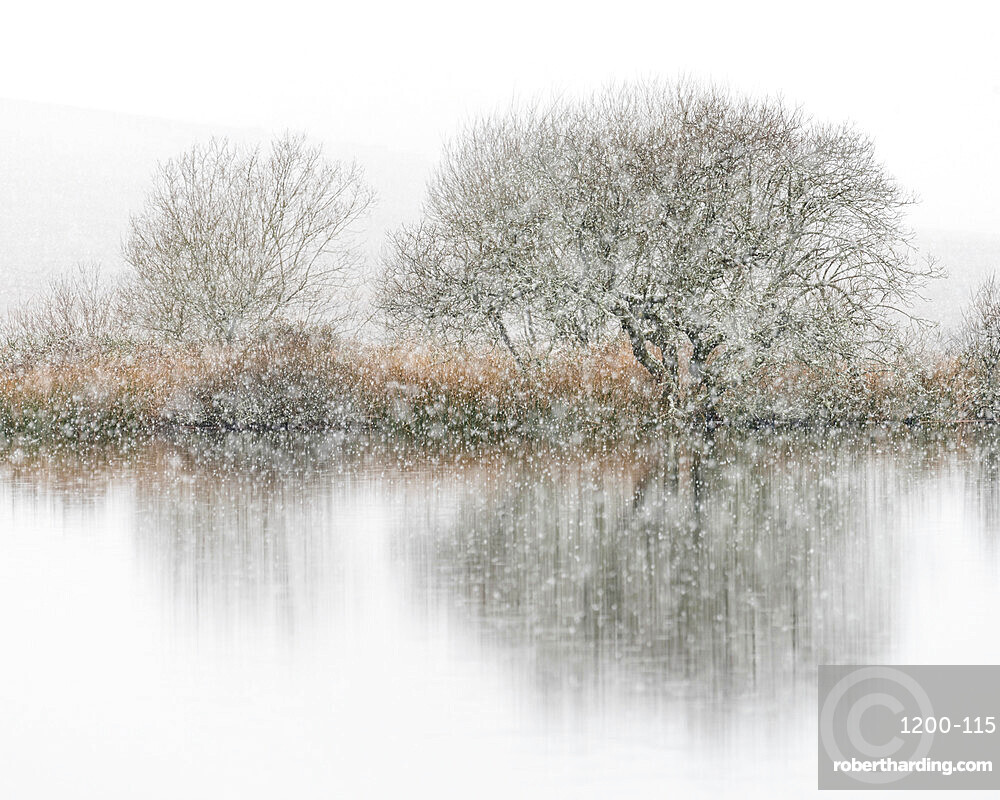 Snowfall, Broad Pool, Gower, South Wales, United Kingdom, Europe
