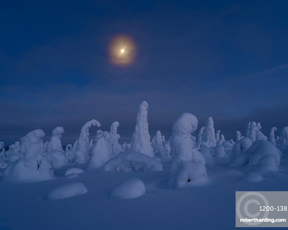 Moonrise over snow covered trees, Tykky, Kuntivaara, Kuusamo, Finland.
