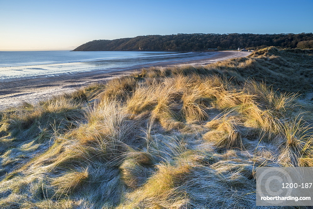 Frost on dunes, Oxwich Bay, Gower, South Wales.