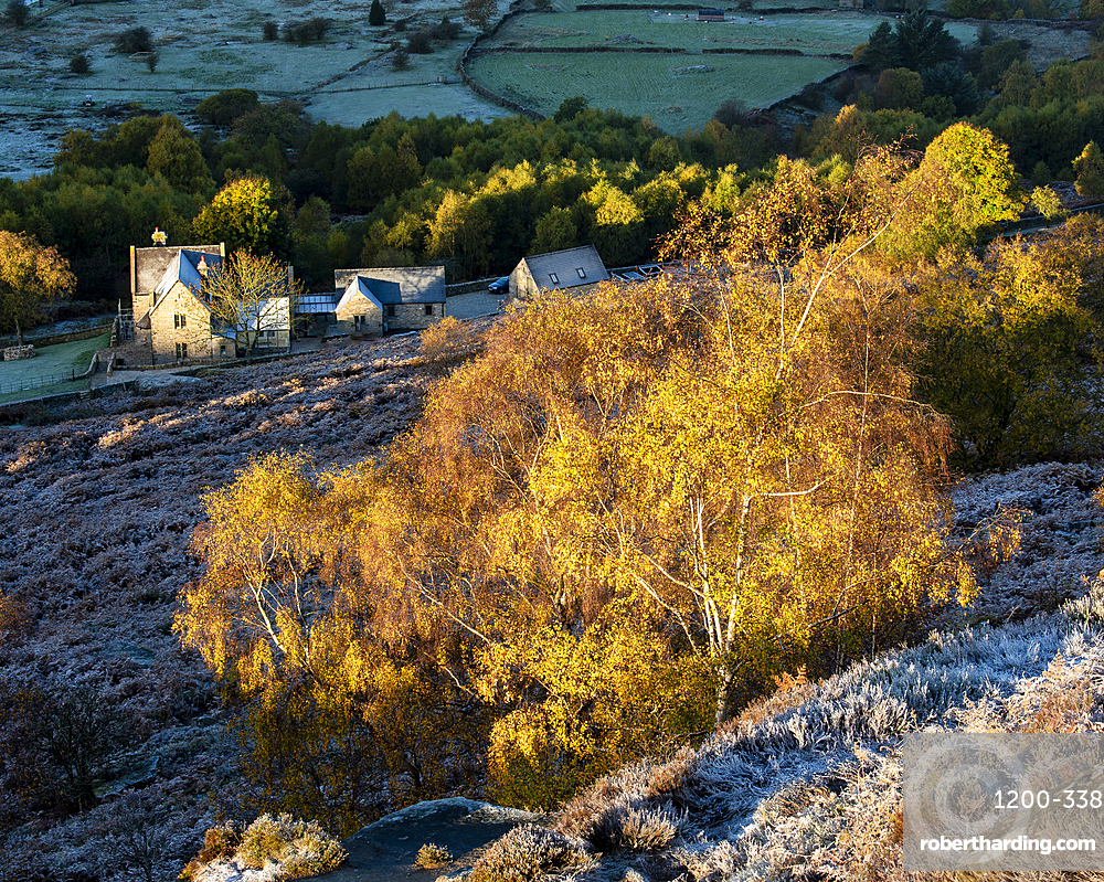 Farm house and silver birch tree on a frosty morning, Peak District National Park, Derbyshire, autumn.