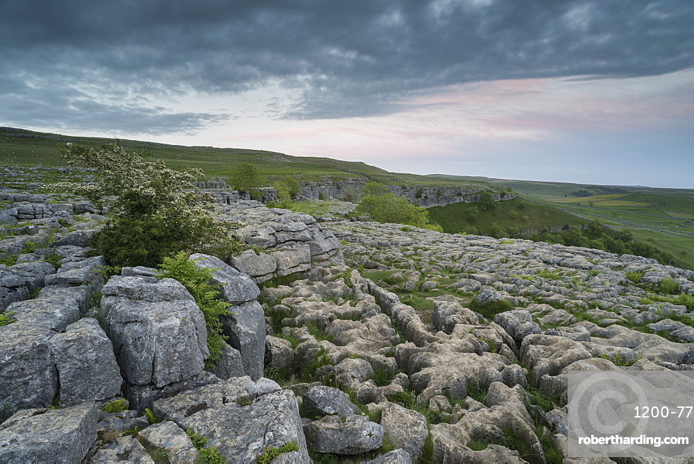 View of limestone pavement, Malham Cove, Malham, Yorkshire Dales National Park, North Yorkshire, England, United Kingdom, Europe