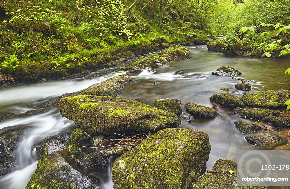 The East Lyn River flowing through ancient woodland at Watersmeet, near Lynmouth, in Exmoor National Park, Devon, England, United Kingdom, Europe