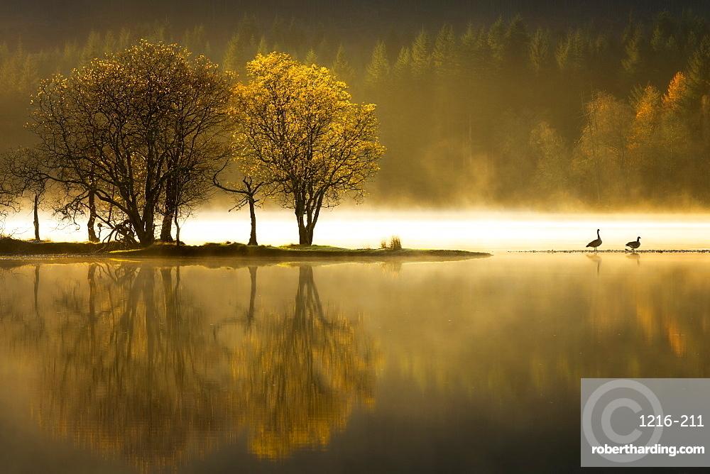 Autumn at Loch Ard, Trossachs National Park, Stirling Region, Scotland, United Kingdom, Europe