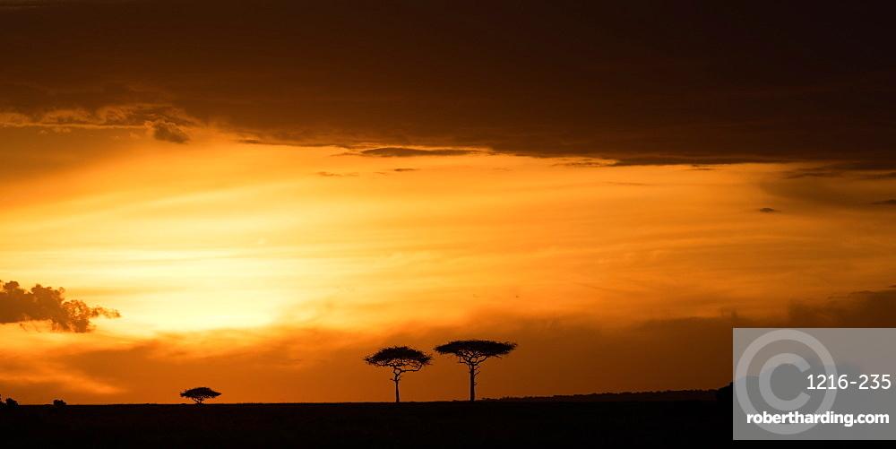 Masai Mara at sunset, Kenya, East Africa, Africa