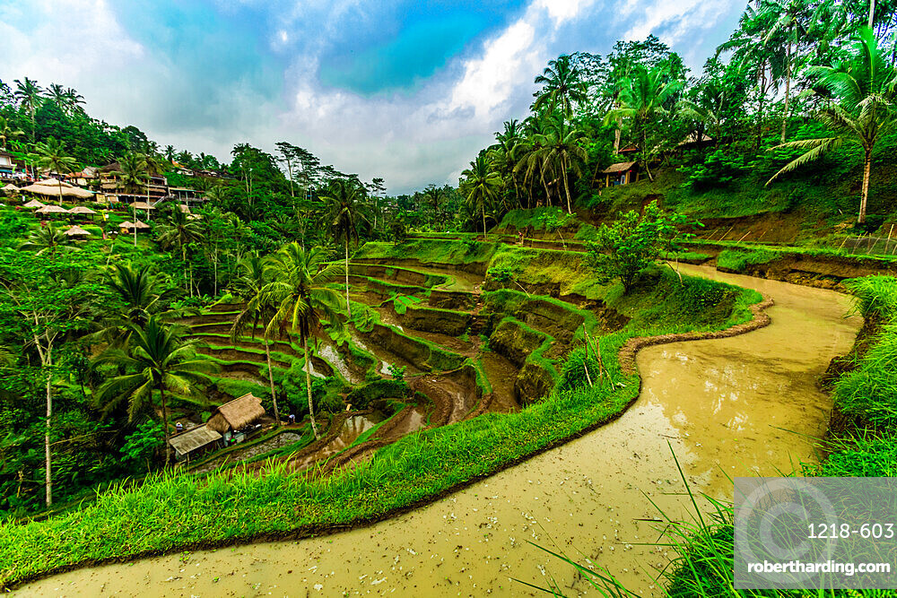 Tegallalang Rice Terrace in Bali, Indonesia, Southeast Asia, Asia