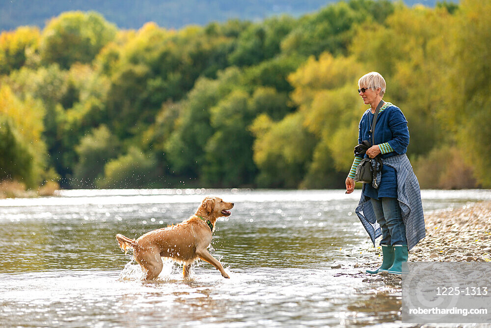 A woman plays with her Golden Retrievr dog in the Wye river on a sunny day