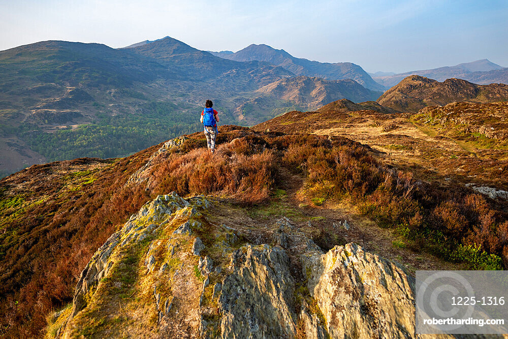 A woman trekking in Snowdonia walks across the top of Mynydd Sygun near Bedgellert with views of Mount Snowdon in the distance