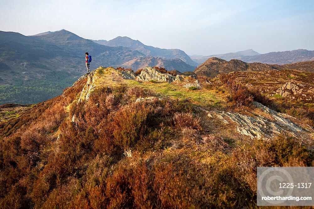A woman trekking in Snowdonia walks across the top of Mynydd Sygun near Bedgellert with views of Mount Snowdon in the distance